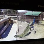 EN LAS MANOS: Televisores Panasonic de ultra alta definición de 8k