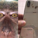 El propietario recupera su iPhone perdido;  Encuentra selfies y videos de monos