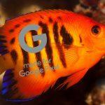 Coral y Flame Angelfish son los nombres en clave de Google Pixel 4 y Pixel 4 XL
